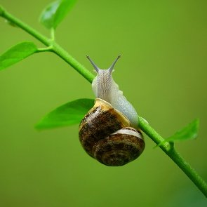 Skin Benefits of Snail Secretion Filtrate and Its Use in Cosmetics