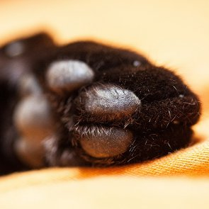 How to Trim Cat's Claws