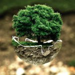 Arbor Day in China and Taiwan