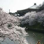 Vernal Equinox Day in Japan