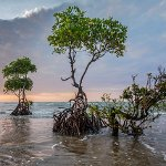 International Day for the Conservation of the Mangrove Ecosystem