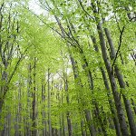 Nature Reserves and National Parks Day in Russia