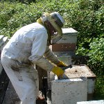 Beekeeper Day in Ukraine