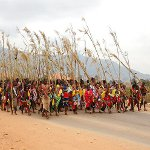 Umhlanga (Reed Dance) in Swaziland