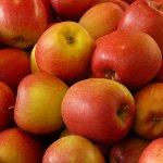 Apple Day in the UK