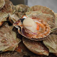 Scallop Fair in Normandy